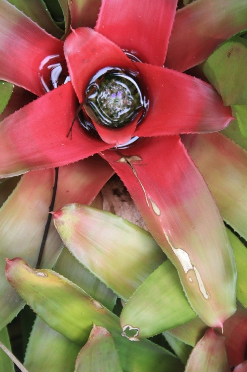jardin botanique Cairns Australie