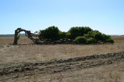 arbres dormeurs australie