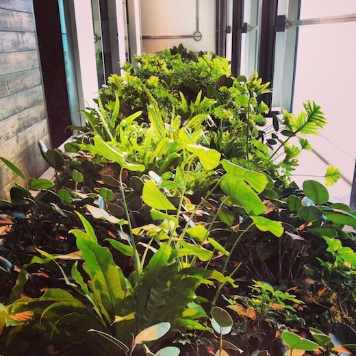 mur vegetal maison developpement durable montreal