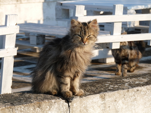 Cisternino trulli chat Italie Pouilles
