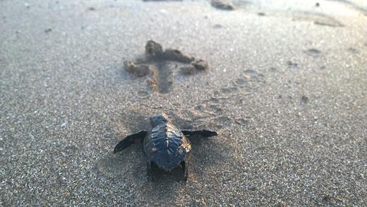 Voyage éco-responsable : le Nicaragua, un paradis encore sauvage