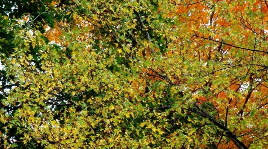 Les sorties musicales à ne pas manquer pour un automne rythmé!