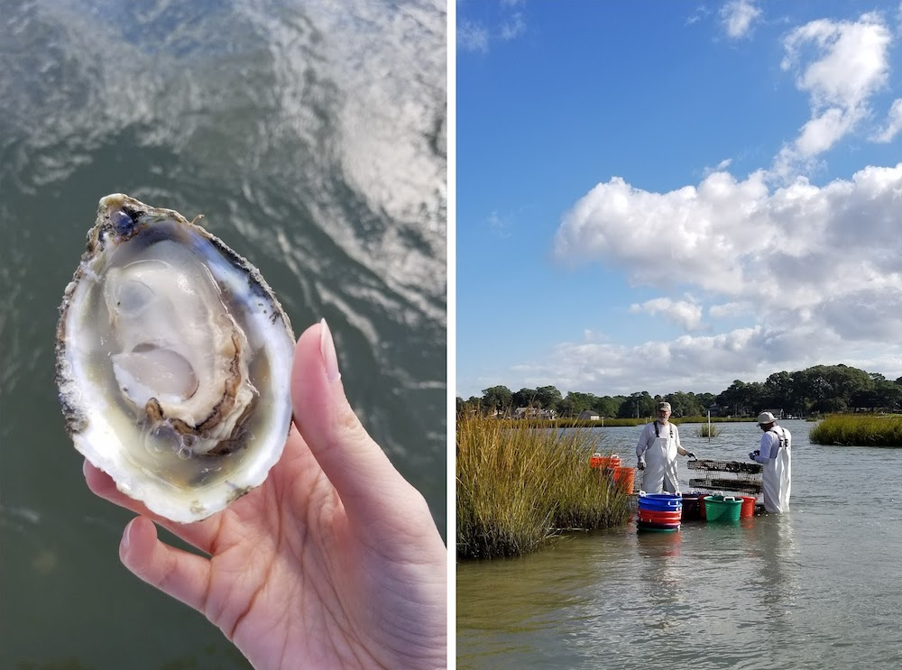 pleasure house oyster farm virginia beach